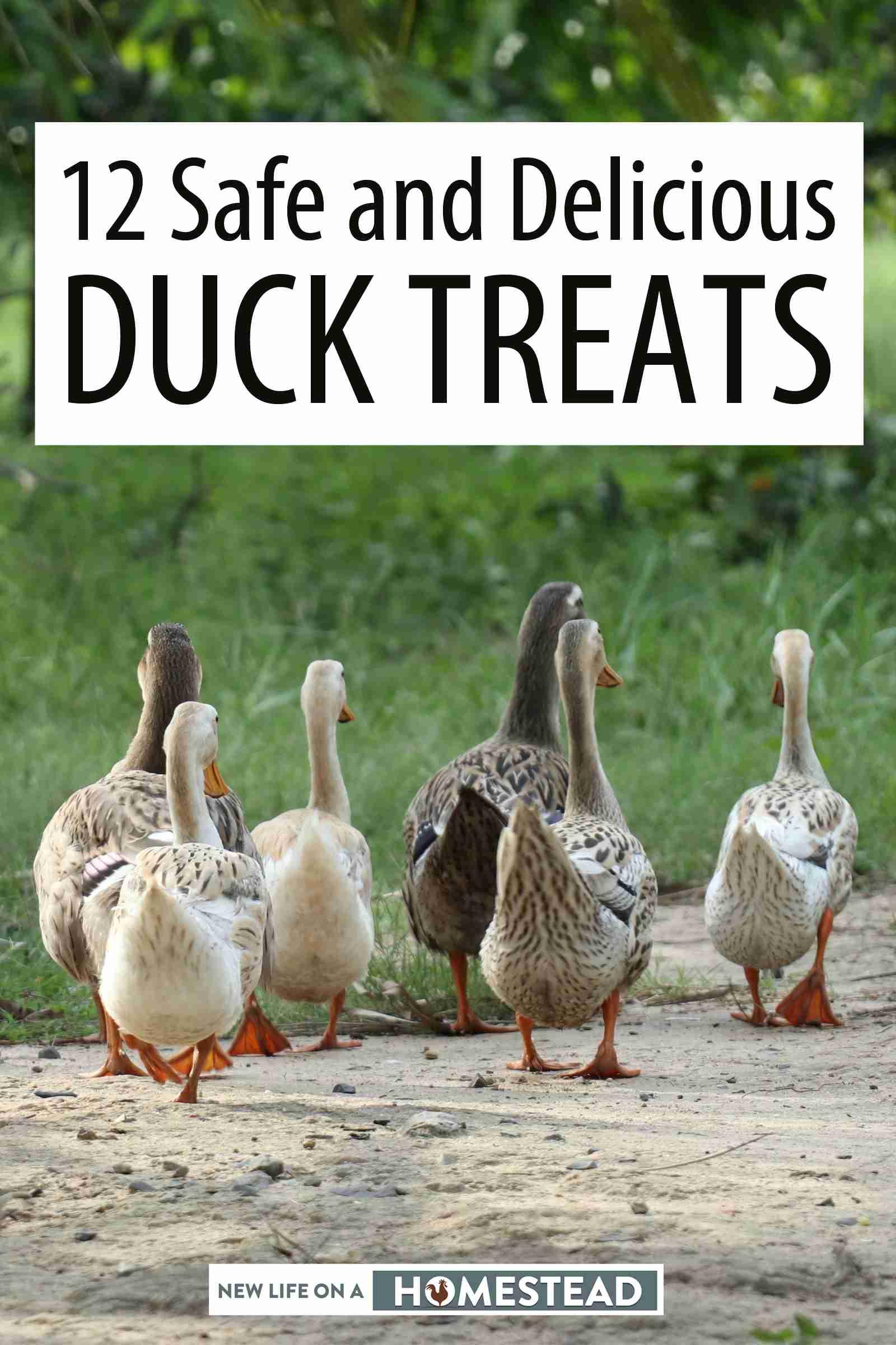 duck treats Pinterest image
