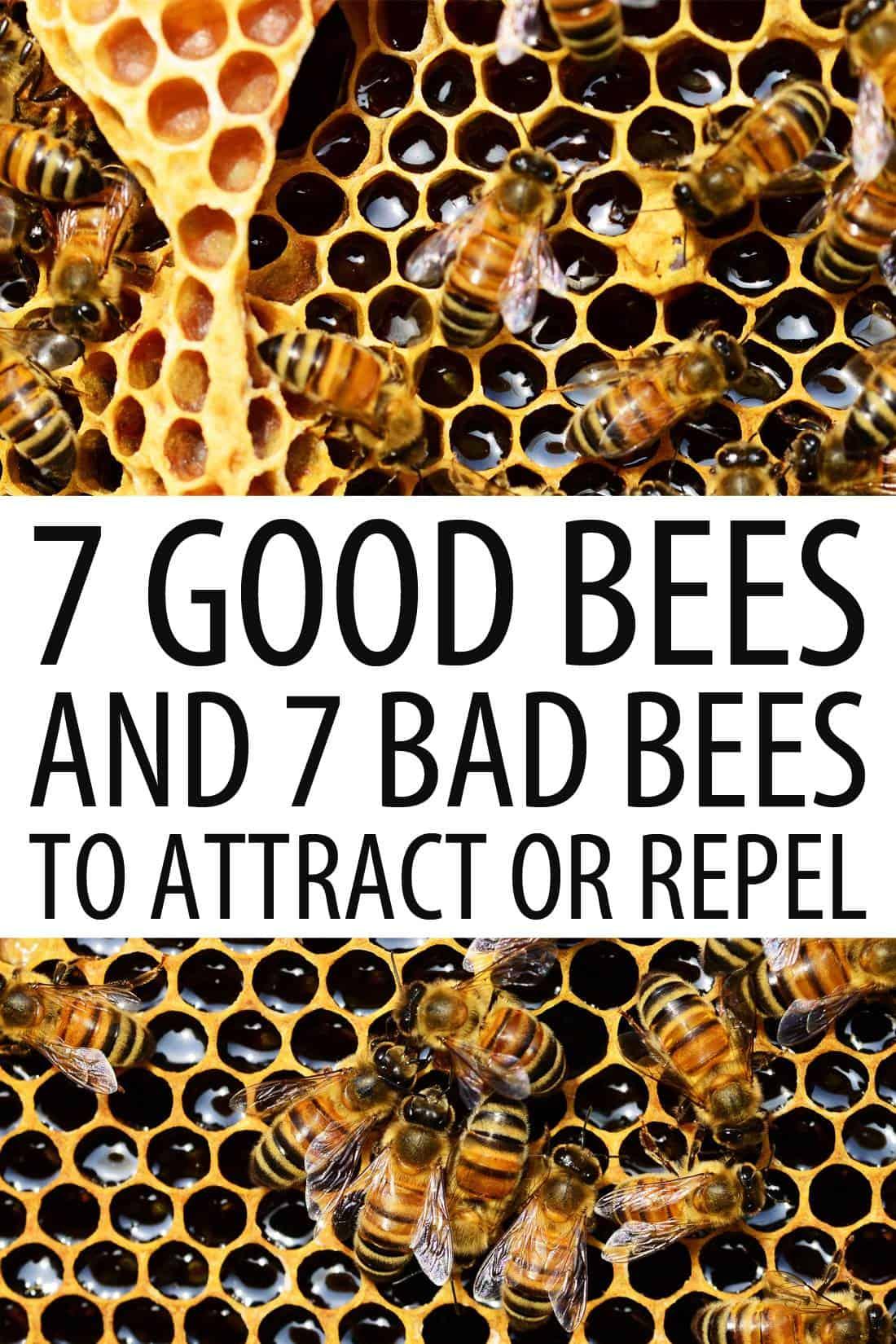 good vs. bad bees Pinterest image
