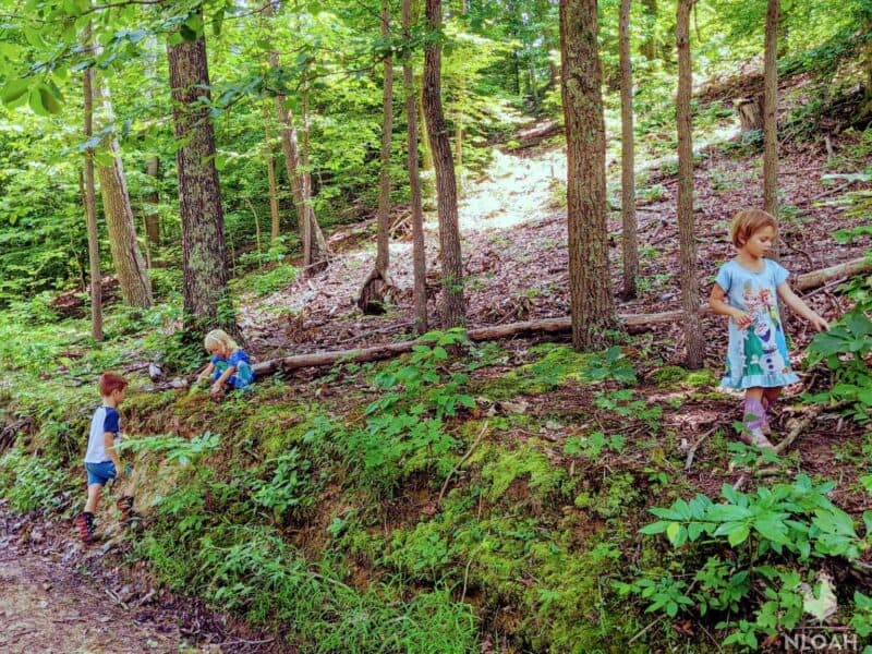 children on a filed trip in the woods
