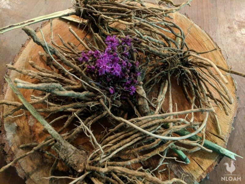 ironweed roots